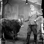 Acsinte vitel